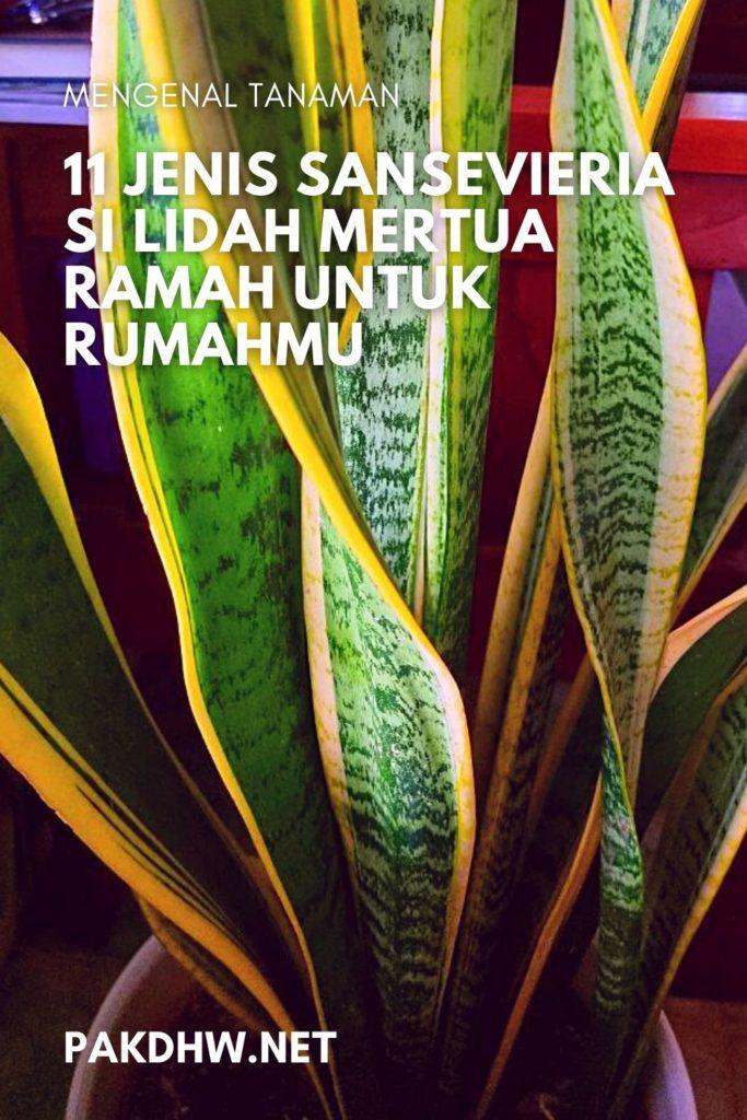 Mengenal Tanaman Bunga Sansevieria Keren Indonesia